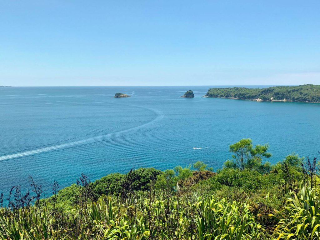 views of the ocean from a walking track