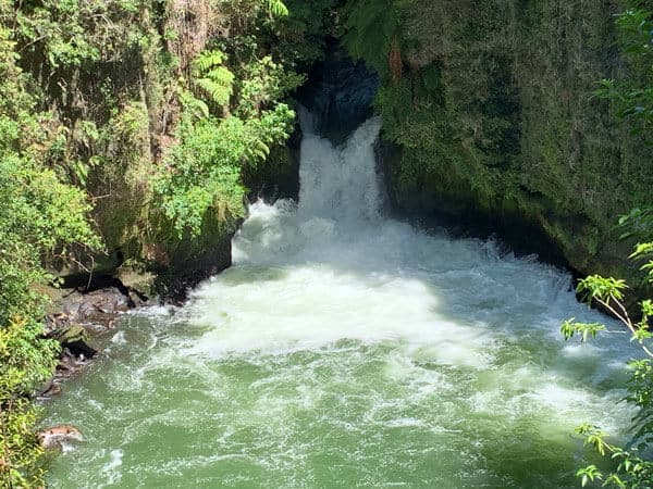 Tutea falls with white water cascading down into an emerald pool with green leafy trees overhanging the river