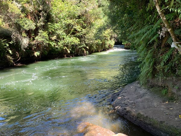 kaituna river flowing past trees and rocks with the sun shining on the green water