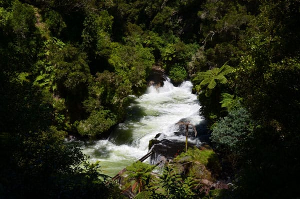 Okere falls with green trees overhanging the white water cascading over the falls