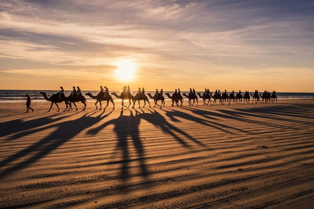 camels on the beach at sunset
