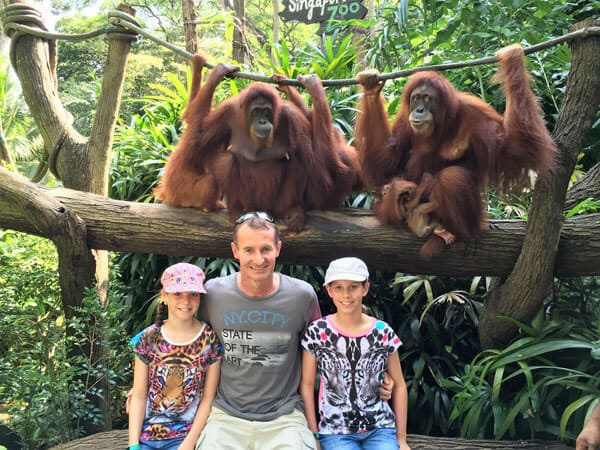 3 people sitting on a bench below 4 orangutans on a branch