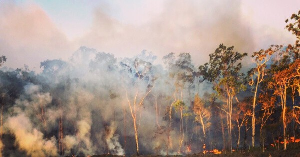 native bush in australia with fire raging through the trees