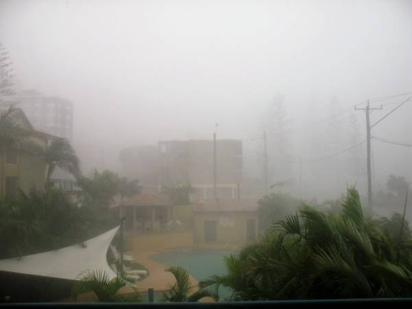 rain storm blowing tropical palm trees
