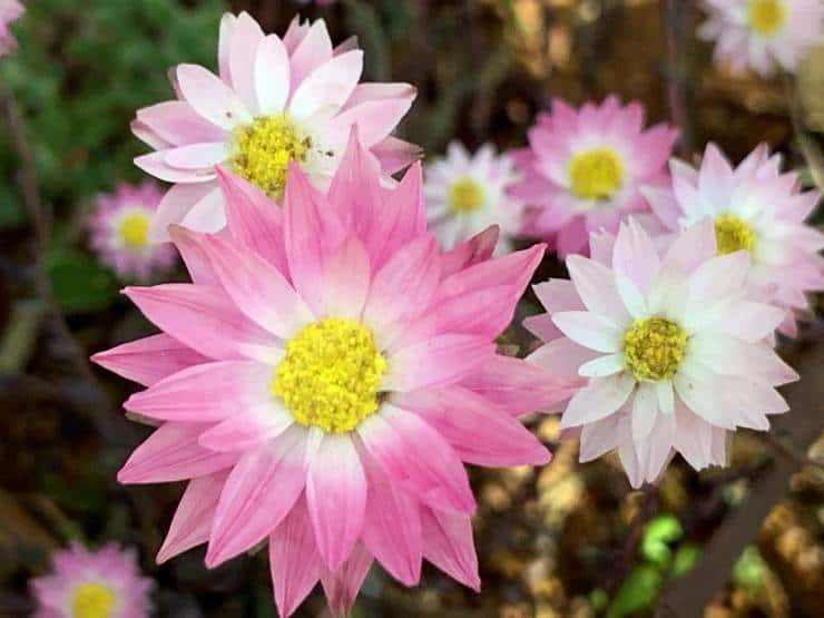 Western Australian Wildflowers 2021 - When & Where to See Them