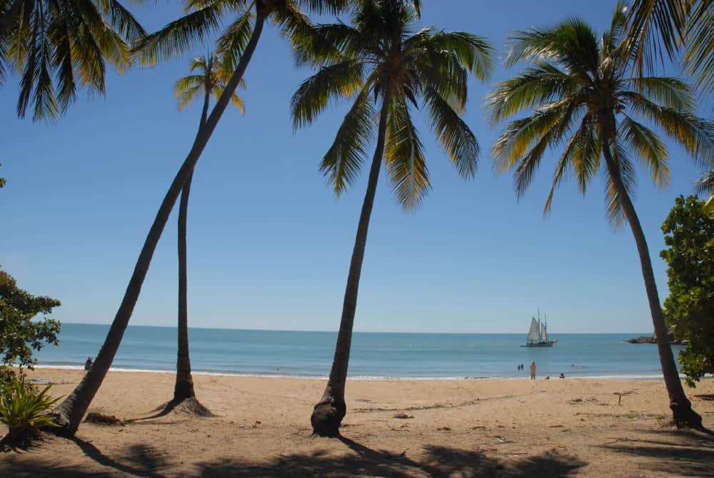 palm trees swaying in the wind on a tropical beach