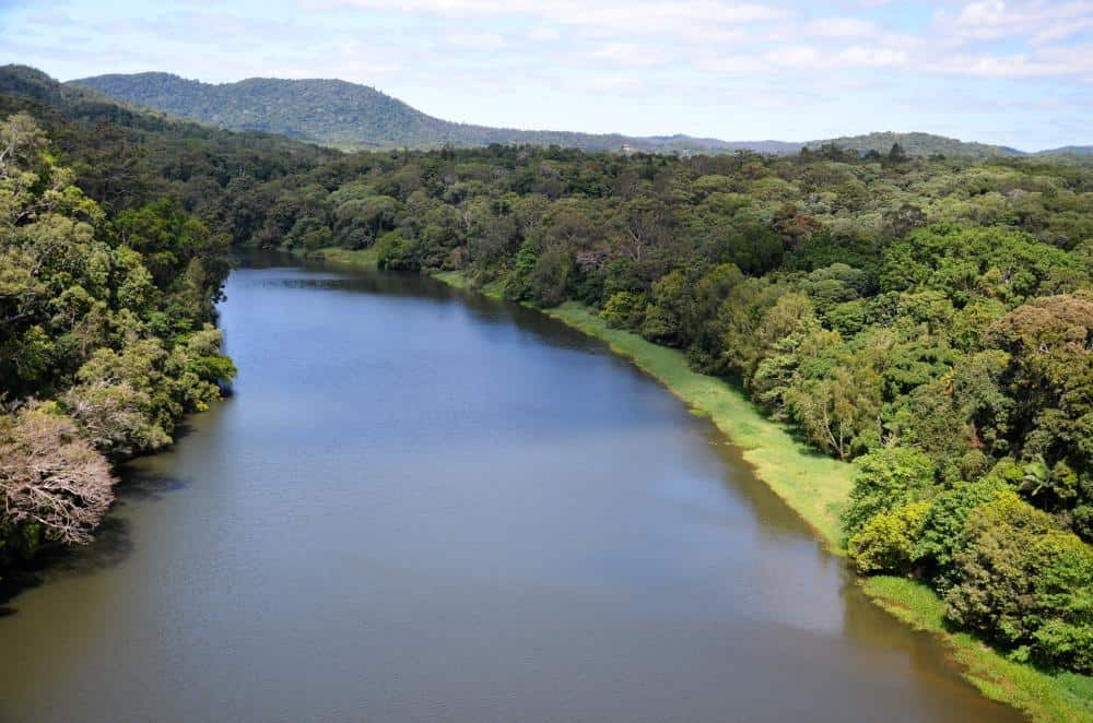 an aerial view of a river surrounded by rainforest