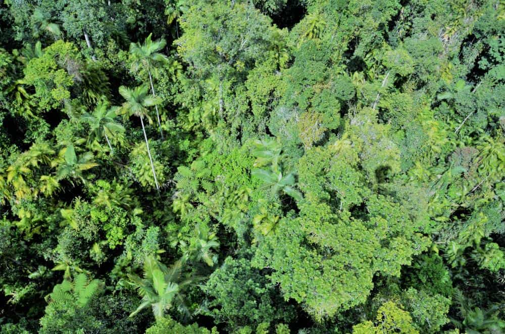aerial view of rainforest canopy