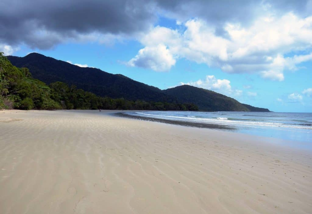 tropical wide sandy beach with rainforest and mangroves cairns to cape tribulation
