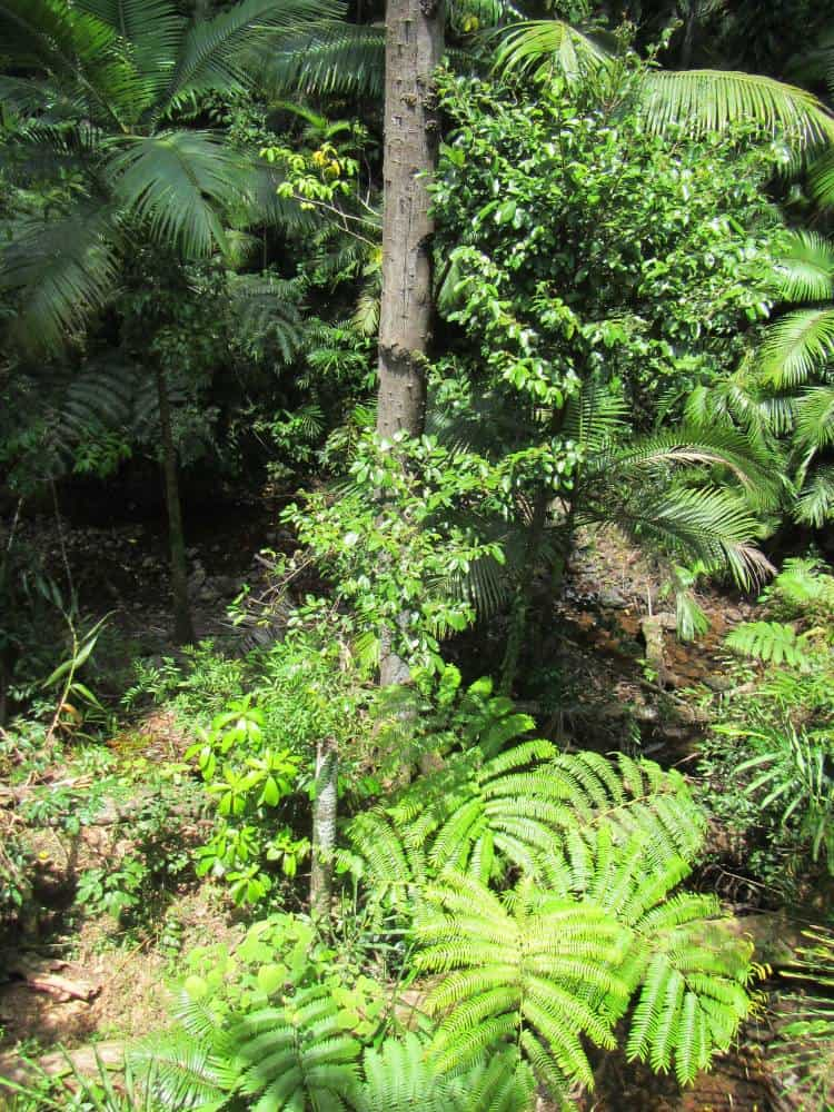 an aerial view of a rainforest canopy
