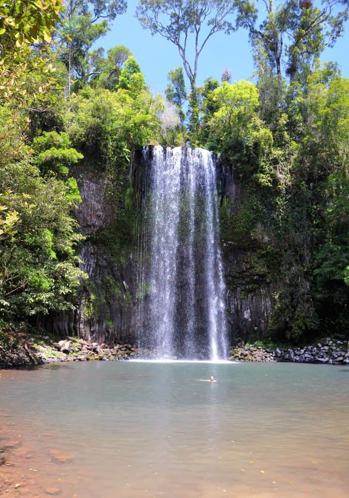 a 18m high waterfall dropping into a waterhole with a man swimming surrounded by beautiful green gum trees and ferns