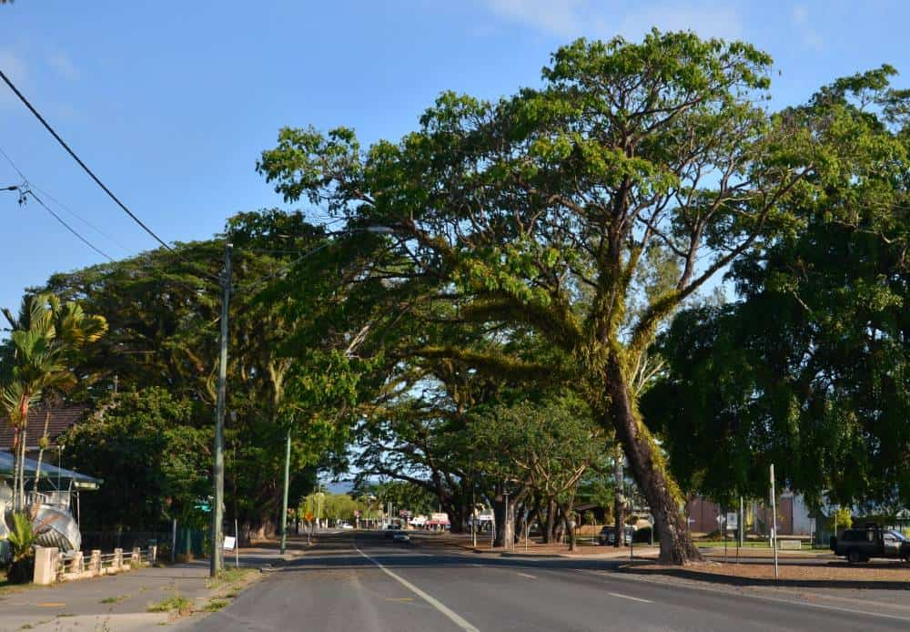 street lined with trees