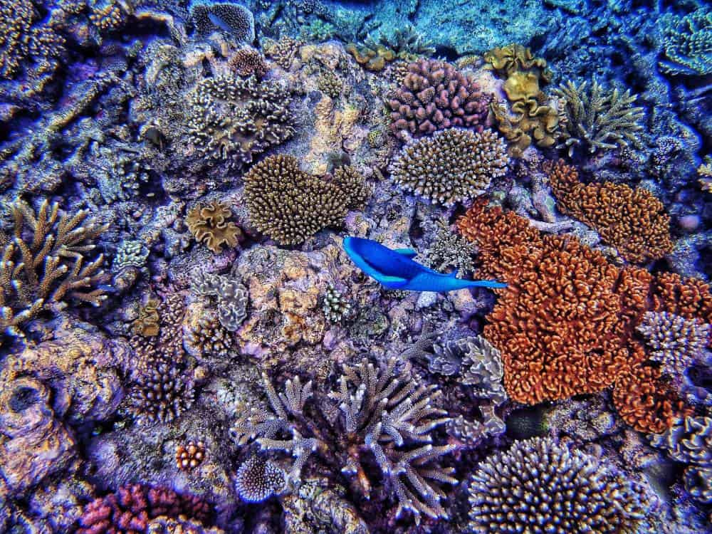 colourful coral reef and tropical fish