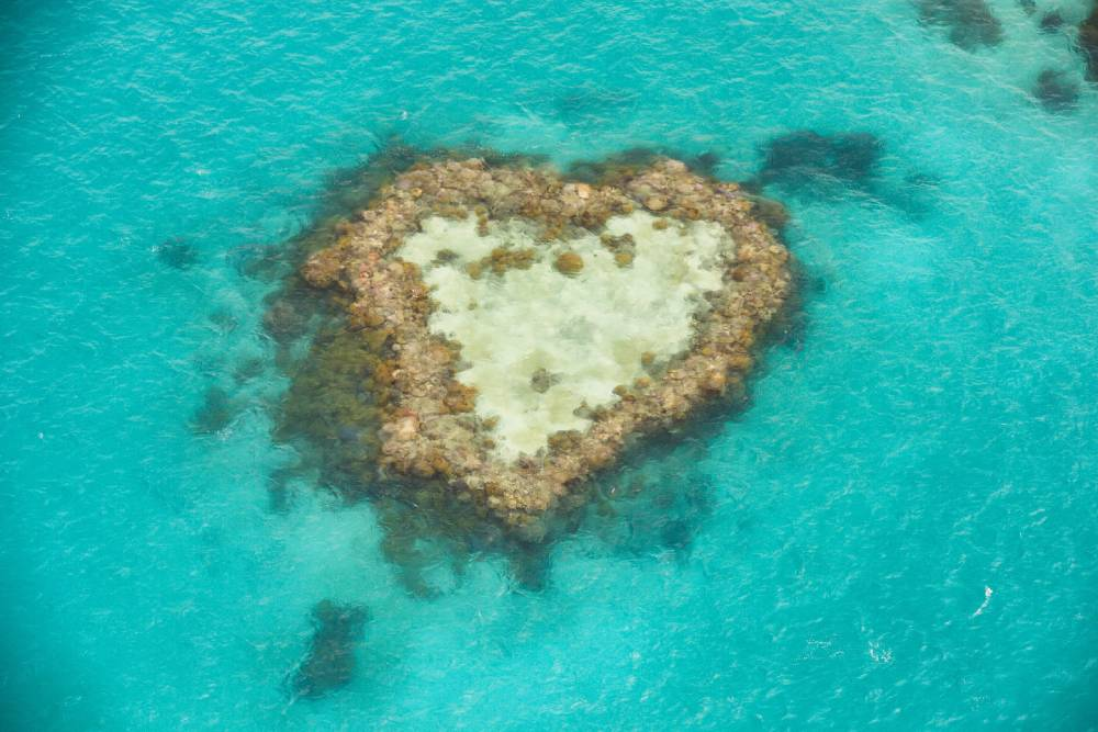 a coral reef in the shape of a heart one of the best places to visit in queensland