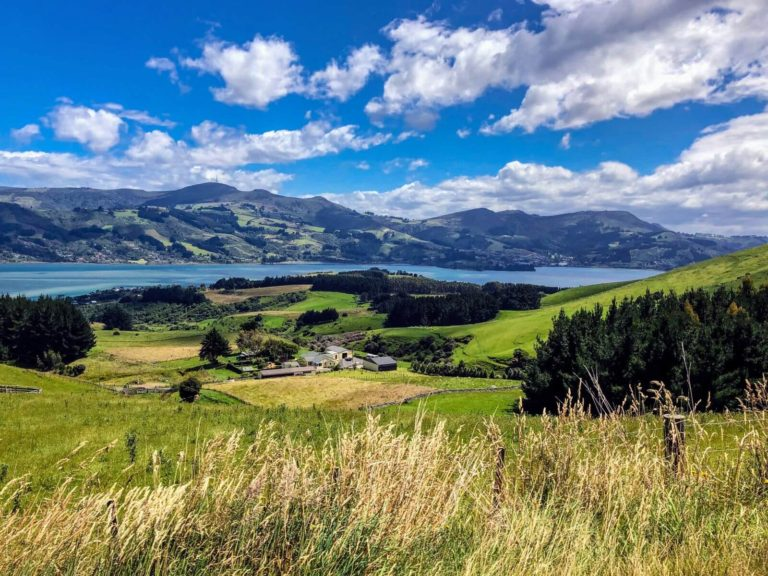 The Best Dunedin Tours from Cruise Ships