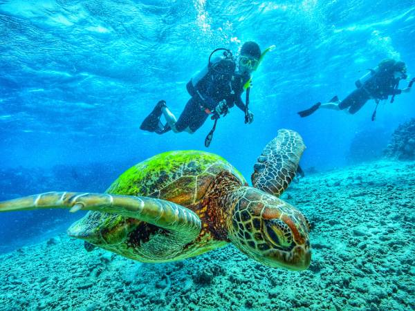 person scuba diving with turtle